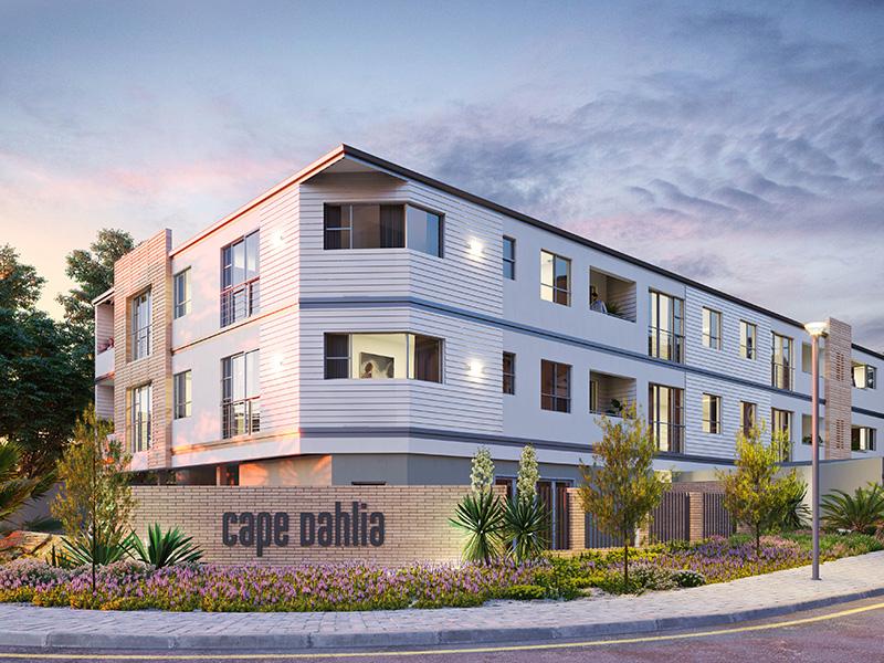 Kim Williams Design – Cape Dahlia 1